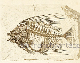 1861 Fossils Fishes by Ch. Orbigny Original Antique zoological Print Paleontology Collectable Ocean life Sea life, sepia-tone print