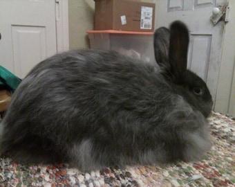 Blue Angora Rabbit Fiber (0.5 ounces)