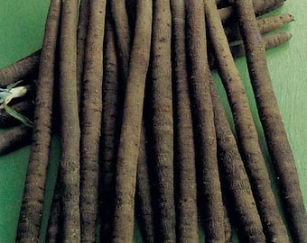 Scorzonera Hispanica Duplex - 150 Seeds - Black or Spanish Salsify
