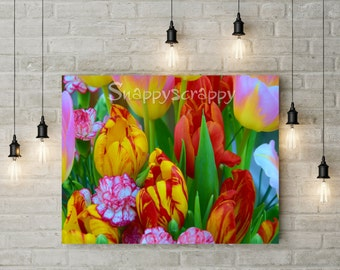 Tulips Stock Photo /  Multi Coloured Spring Flowers Photography