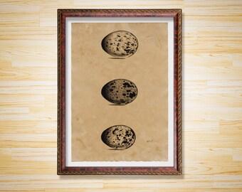Eggs poster Bird print Animal decor