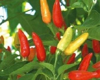 100 Hot Tabasco Pepper Seeds Chili Pepper