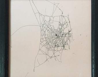 Real Spider Web on Paper