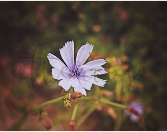 Purple Flower Fine Art Photography. Flower Photography. Flower Print. Nature Print. Nature Photography. Botanical Print. Flower Art.