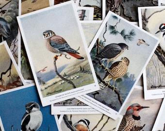 Vintage Birds of North America Art Cards   Set of 4