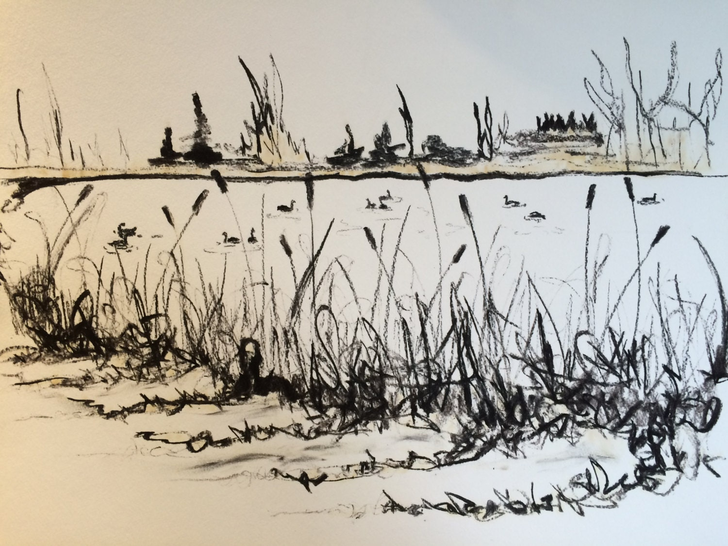 Geese And Cattails Charcoal Drawing Of Pond By