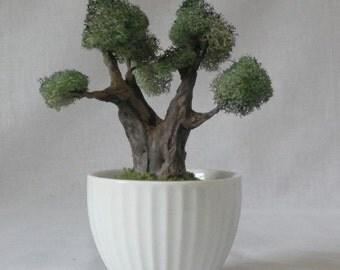 MB18 Miniature Bonsai tree in white ceramic pot