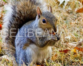 Limited Edition Central Park Squirrel Photo Print