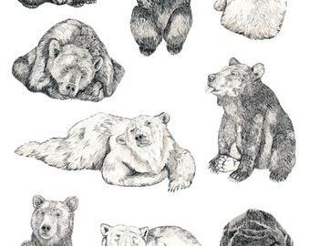 Bears Collage