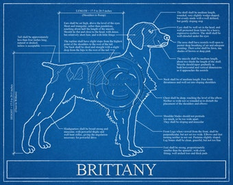 Brittany Blueprint Elevation / Brittany Art / Brittany Wall Art / Brittany Gift / Brittany Print