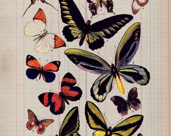 Butterfly Study on Antique Ledger Paper from 19th Century decor insect entomologist gift art print wall farmhouse rustic 1800s VP8530