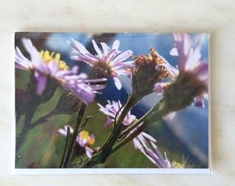 Flower Greeting Card - Purple Flowers - 4x6 blank card