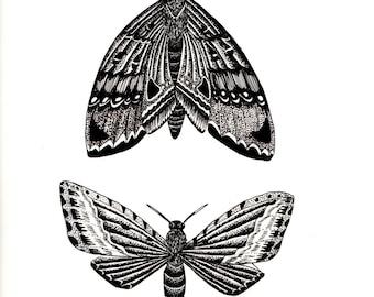 Moth Print