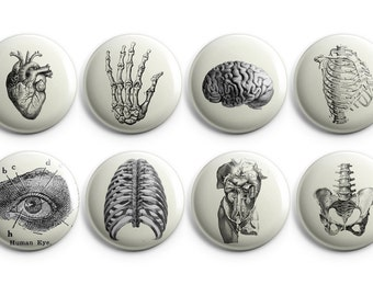 "Vintage anatomy buttons, Anatomy fridge magnets - 1.25"" buttons - stocking stuffers, coworker gift, vintage heart - B004"