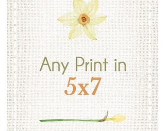 Any Print as a 5x7 - You choose!