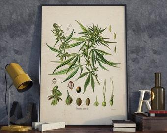 Cannabis Sativa Vintage Print, Marijuana Plant, Marijuana Print, Floral  Art, Plant Print Wall Art - VA033
