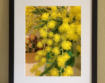 Mimosa. Printable Wall Art, Digital Print from my original photo. Instant Download