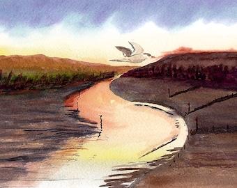Evening Tern