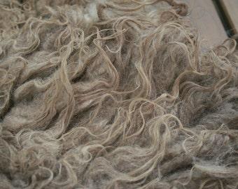 Ruwe ongewassen schapen vacht/Raw unwashed fleece North Ronaldsay