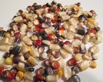 Indian Corn Seed - Ornamental - 200 Multi Colored Seeds - Great for Crafts