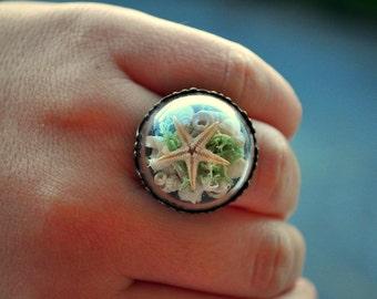 Sea ring, Real Seashell ring, Beach ring, Ocean ring, Vintage ring, Bronze ring, Romantic ring, Mediterranean seashells