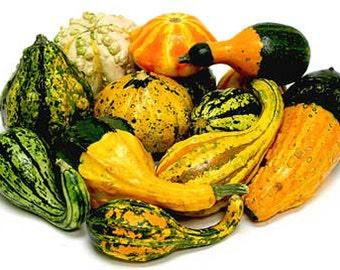 Aprox. 30 seeds Ornamental gourd pumpkin MIX 2 g fresh seeds best before 2018