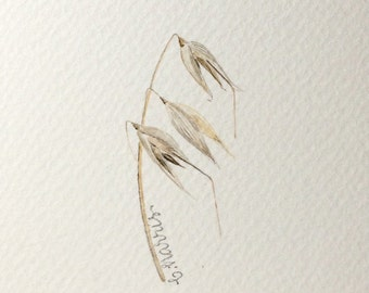 original watercolor - avena sterilis grass