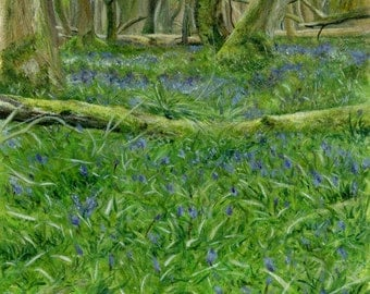 HillArt  - Bluebell Escape Print