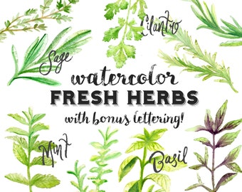 Watercolor Fresh Herbs with Hand Lettering - INSTANT DOWNLOAD - Apothecary and Cooking - High Res, PNG, Basil, Oregano, Rosemary, Mint
