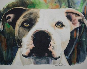 Original Watercolor Painting Pit Bull Dog Pet Animal