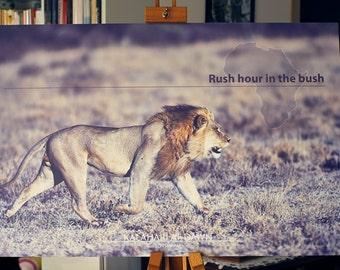 Rush hour in the bush