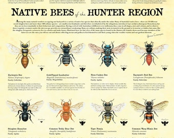 Native Bees of the Hunter - poster
