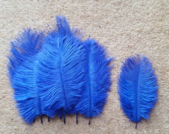 10 blue ostrich feathers