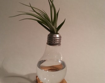 Regular Incandescent Light Bulb Vase