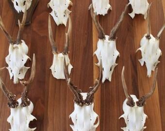 Vintage deer antler antlers Blackforest
