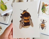Bombus ruderatus A6 greetings card