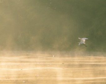 Wildlife morning on Borneo.