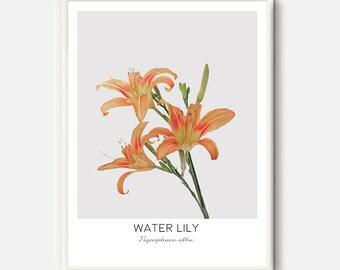 Lilium Print, Lilium Art, Lilium Photo, Lily Photo, Garden Flower, Red Flowers, Orange Flower, Modern Botanical Prints, Green Art