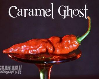 Caramel Ghost (15+ Seeds)