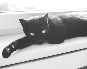 Cat Digital Photo - Cat Photography - Black Cat - Black Cat Photo - Black and White - Cat - Digital Photo - Digital Download - Wall Decor