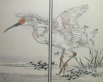 Japanese Crested Ibis, 'Toki ': An Original, Signed 1880s Japanese Woodblock Bird Birds Print By KONO BAIREI