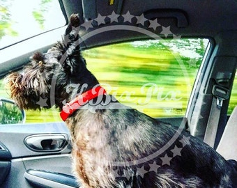 Zoom Dog