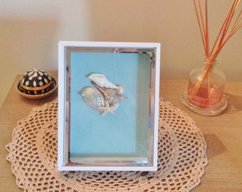 Seashell Shadow Box / Beach Decor