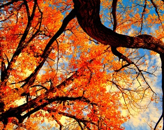 Fall Photography - Tree Photography - Nature Photography