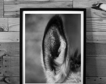 Donkey photography, animal photography, ear close-up, black and white photography, nature, instant download, printable art, home decor