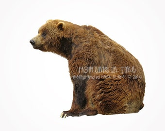 Moments In Time Animal Overlay Brown Bear Sitting