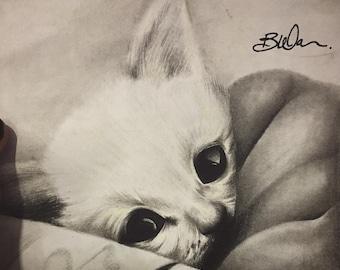 Kitty Pencil Drawing