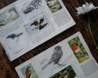 Vintage ehemera~vintage tea cards~brooke bond bird cards~brooke bond vintage card book~bird cards~vintage ephemera~bird ephemera~cards