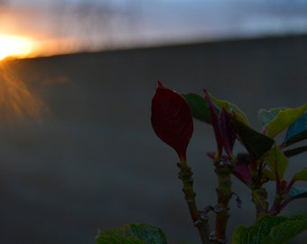 Flower Glare