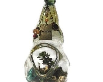 Hand-blown Hanging Terrarium - Succulents with Harmony
